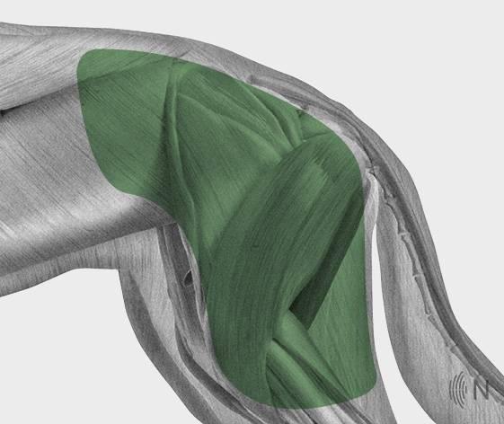 media/image/Bilder_Behandlungen_Anatomie_Hund_Extremit-ten_H-fte.jpg