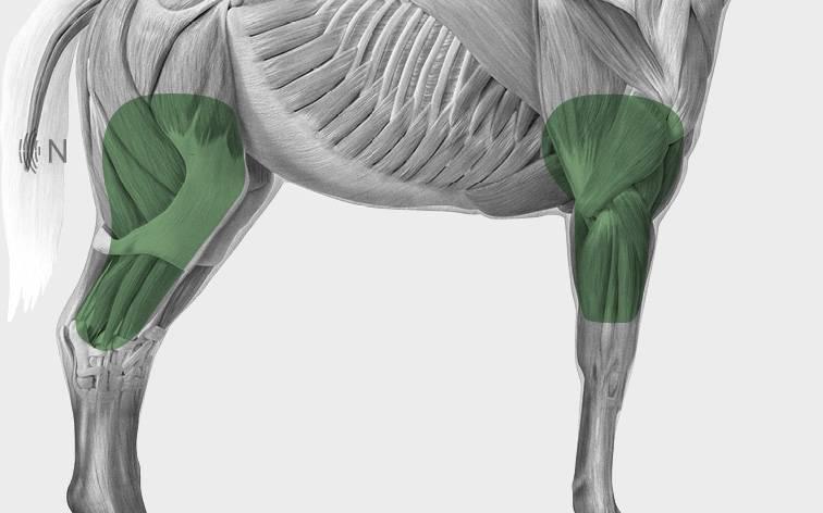 media/image/Bilder_Behandlungen_Anatomie_Pferd_Extremit-ten_Gelenke.jpg