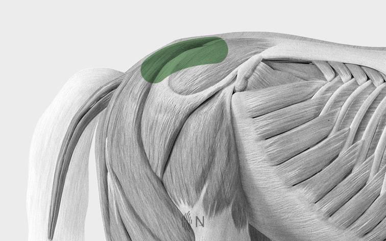 media/image/Bilder_Behandlungen_Anatomie_Pferd_ISG.jpg