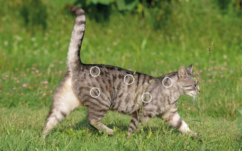 Myofasziale Schmerzen bei Katzen mit dem NOVAFON behandeln