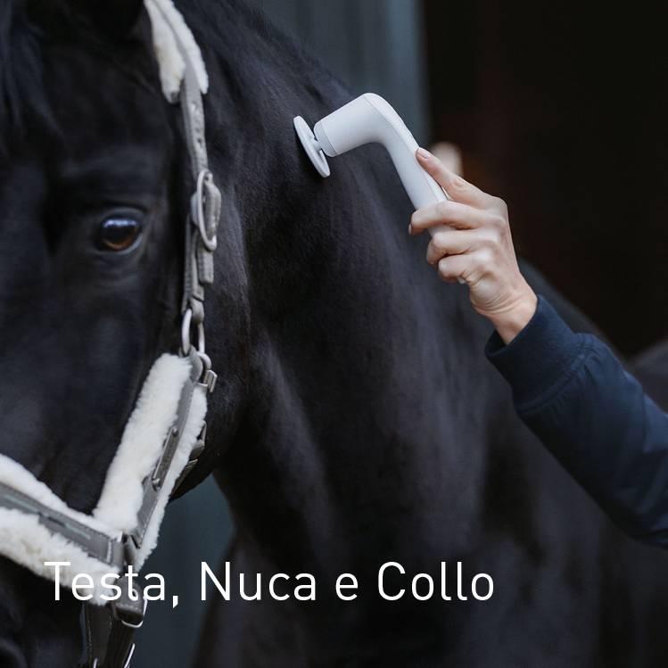 Kopf, Nacken und Hals beim Pferd behandeln