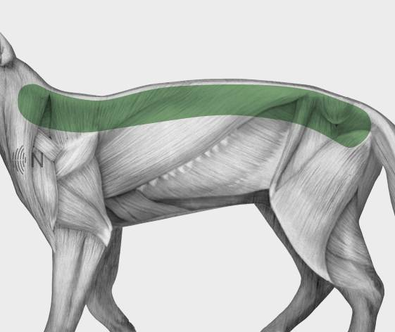 media/image/Bilder_Behandlungen_Anatomie_Katze_R-cken_Spondylose.jpg