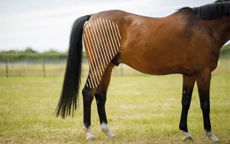Knie beim Pferd mit dem NOVAFON behandeln