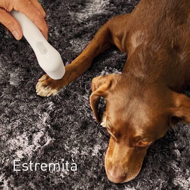 Extremitäten bei Hunden behandeln mit NOVAFON