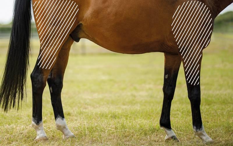 Sehnenerkrankung beim Pferd mit dem NOVAFON behandeln