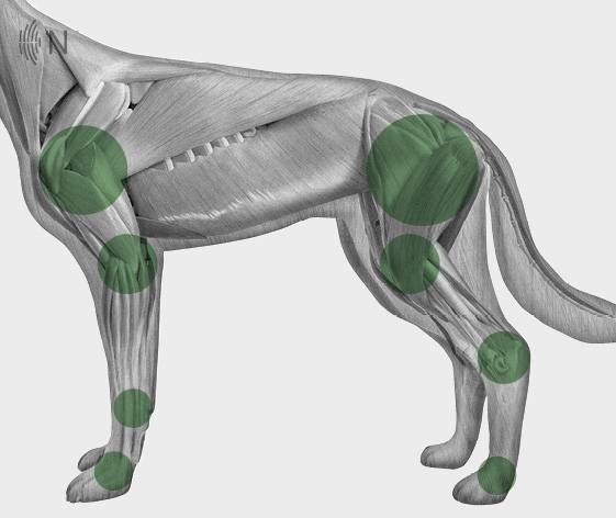 media/image/Bilder_Behandlungen_Anatomie_Hund_Extremit-ten_Arthrose.jpg