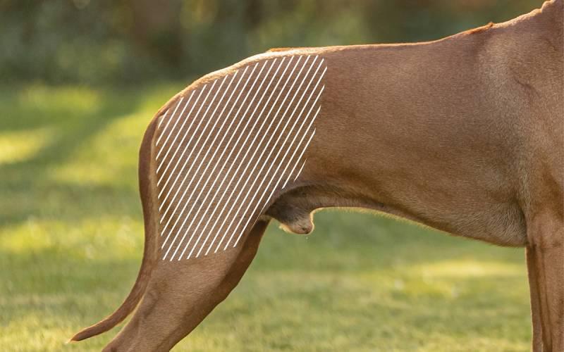Hüftdysplasie beim Hund mit dem NOVAFON behandeln