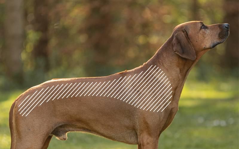 Bandscheibenvorfall beim Hund mit dem NOVAFON behandeln