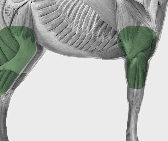 media/image/Bilder_Behandlungen_Anatomie_Pferd_Extremit-ten_Gelenke_2.jpg