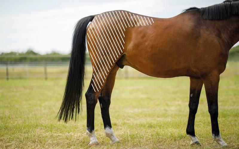 Defizite der Hinterhand beim Pferd mit dem NOVAFON behandeln